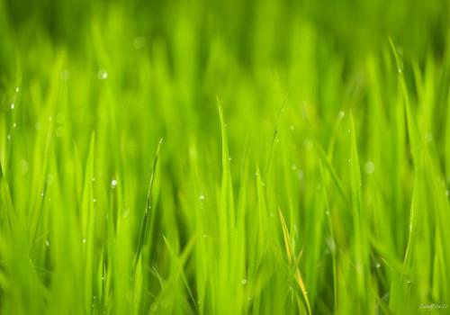 Hoe kun jij een bijdrage leveren aan een groene stad?